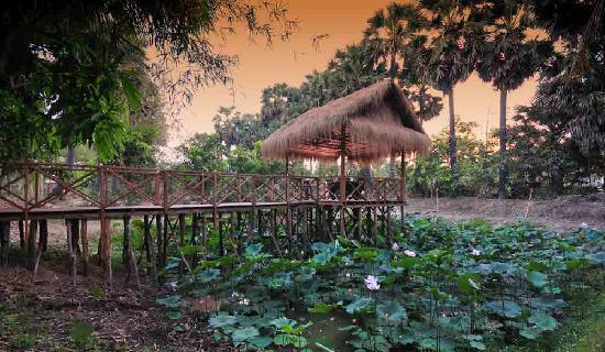 Destination Dining: Dining over your own lotus pond