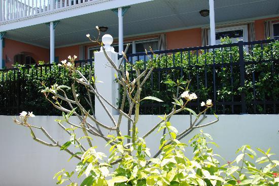 Arawak Bay: the Inn at Salt River: Tropical Flowers