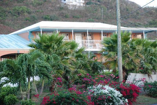 Arawak Bay: the Inn at Salt River: Beautiful flowers