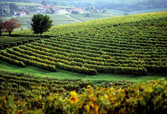 Cognac, Frankrike: La Visite Louis XIII