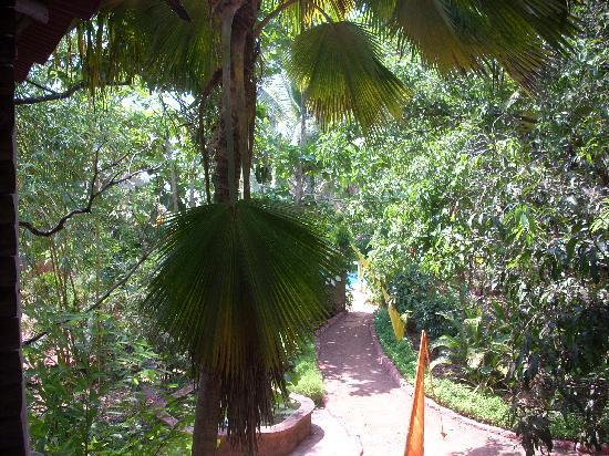 Assagao, India: Blick von der Yoga-Lounge