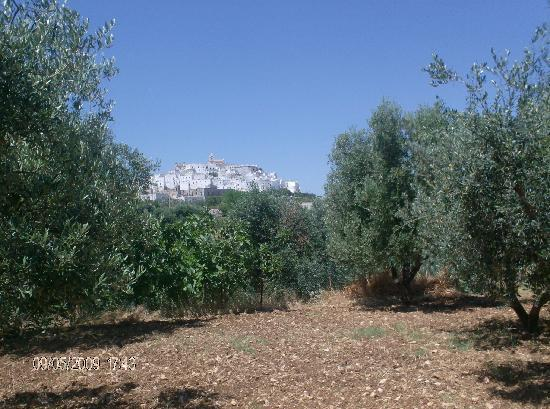 ostuni from the country side