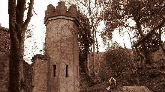 Old Ivy House: in Killarney Kirchenruine