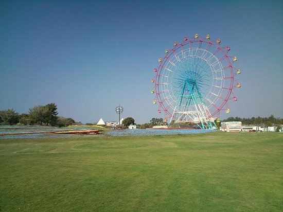 Uminonakamichi Seaside Park: 広くて綺麗な公園です