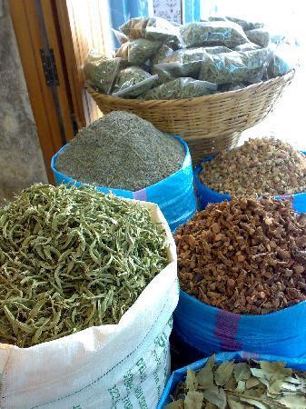 Chefchaouen, Marocco: Especies