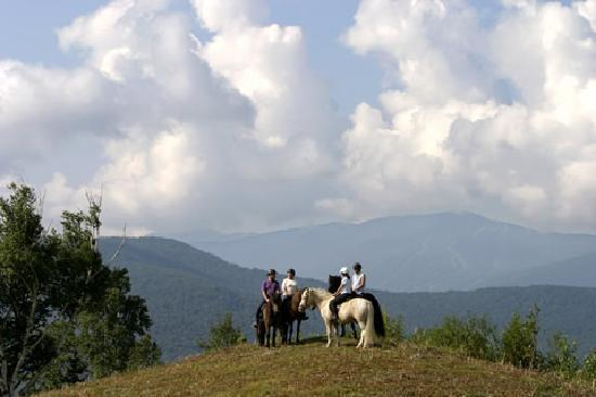 Domaine de Pommayrac: Horseback trail riding with our horse riding centre