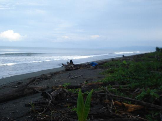 Playa Zancudo, Costa Rica : calm beach, no rip tides, no big waves.