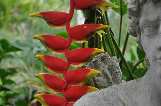 Hunte's Gardens: Amazing flowers