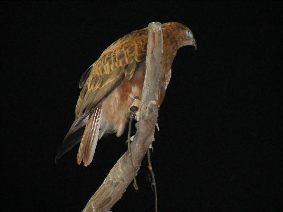 Al Ain Zoo: Evening bird show