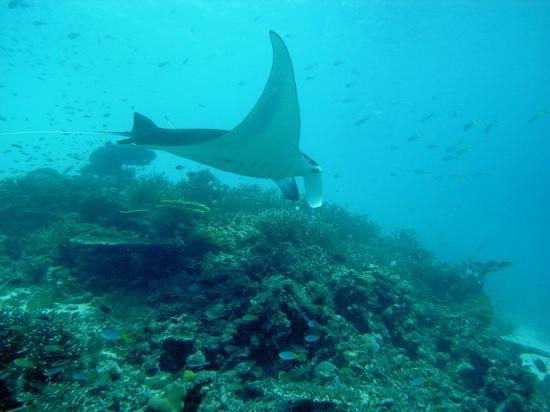 Sorido Bay Resort: Manta Sandy