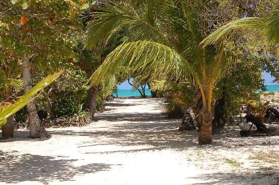 Small Hope Bay Lodge: Path from our cabin to the lodge