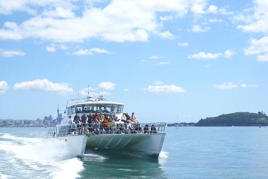 Auckland Whale & Dolphin Safari : Dolphin Explorer
