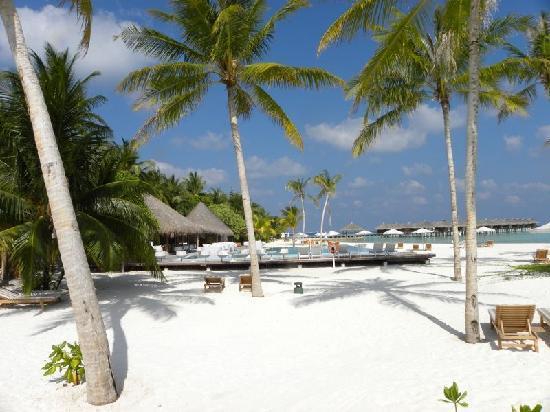 Maafushivaru: Spiaggia principale con piscina e bar