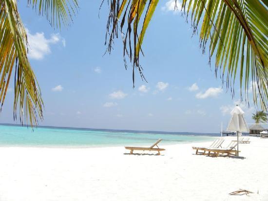 Maafushivaru: Spiaggia davanti camera