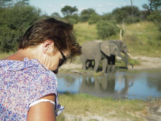 Elephant Sands Botswana: Elephant at water hole