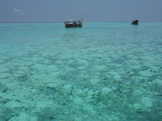 Maafushivaru : vue de la plage