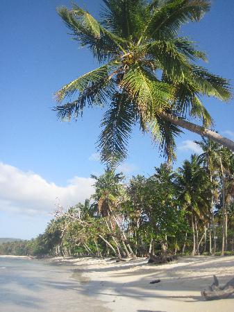 Grand Paradise Samana : Along Las Galeras Beach