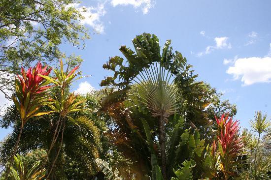 Pereira - Day Tours : at The Botanic Garden