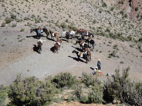 Trekking Travel Expediciones - Day Tours : Caballos