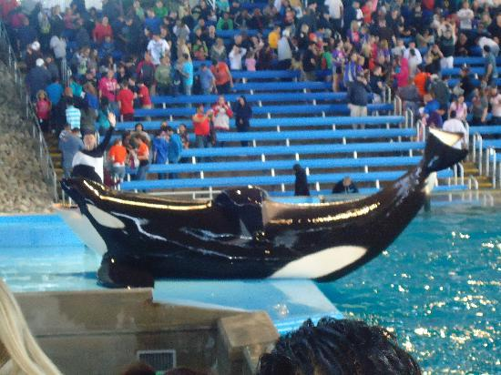 SeaWorld Packages San Antonio Texas