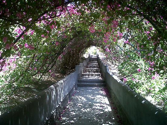 Las Sirenas de Santa Clara - Beach Front Cabins: Flower Tunnel walk to beach
