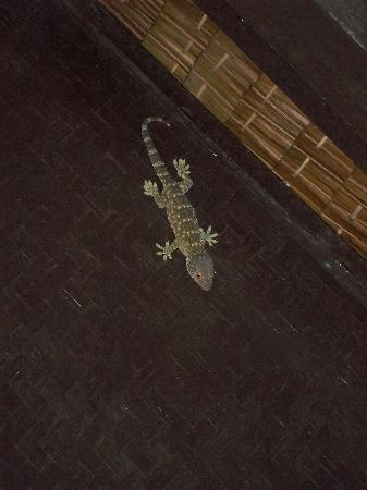 New Hut Bungalows: Gecko inside the hut!