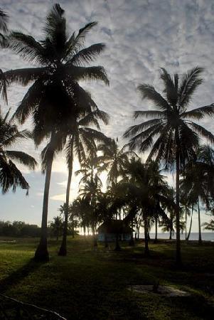 Butiama Beach: beautiful palm tress