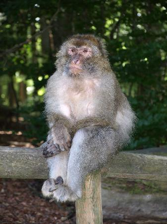 Affenberg Salem: Danke Gott, dass ich kein Affe bin...
