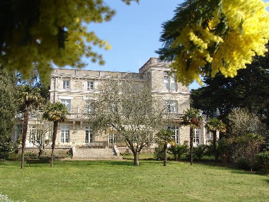 Chateau du Pelave : Les mimosas