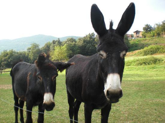 Mas Garganta: Els burros