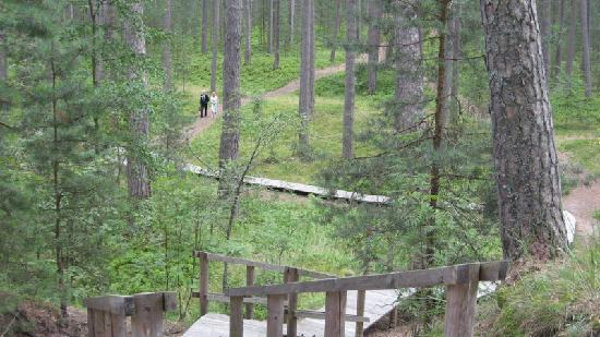 Nature park Ragakāpa in Jurmala