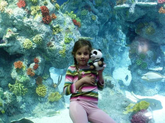 Bristol Aquarium : 'swimming' with anemones
