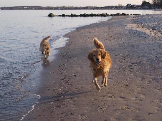 Hof Sierksdorf: Auch unsere Hunde fanden es toll