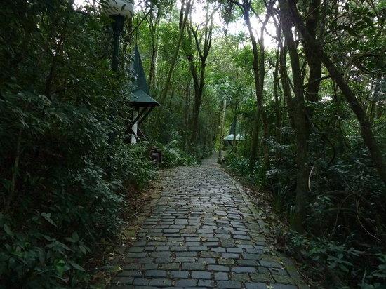 Deutscher Wald / Bosque Alemao : Der Pfad