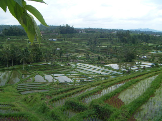 Bali Nature Adventure Tours