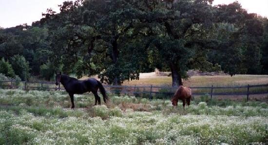 Kenwood Oaks Guest House: Equine Residents at Kenwood Oaks