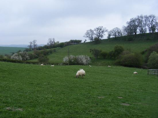 Adforton, UK: farm setting