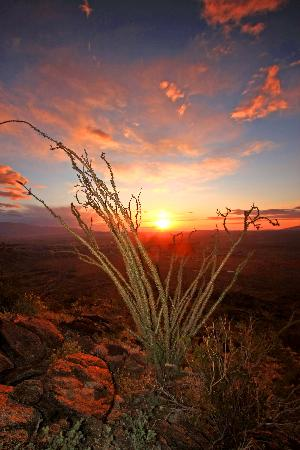 Boynton's - Hacienda del Sol: Borrego sunrise in bloom