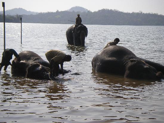 Whispering Palms Beach Resort : Elephant Santuary (these are wild elephants)