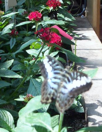 Museum Of Science: Butterfly Garden