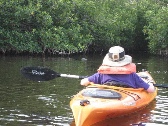 Everglades Rentals & Eco Adventures: can you see the gator in the water?