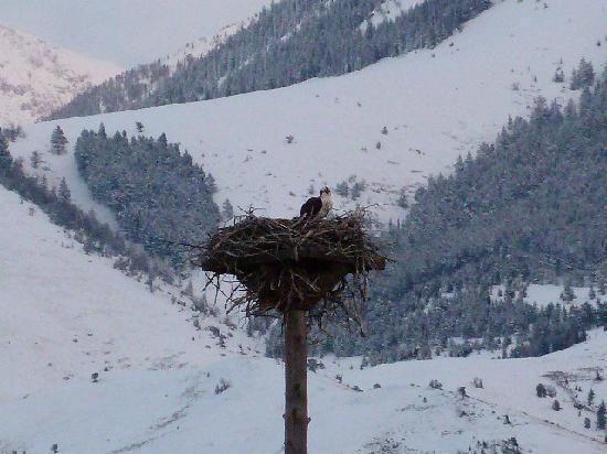 Paradise Gateway Bed & Breakfast: Osprey in nest