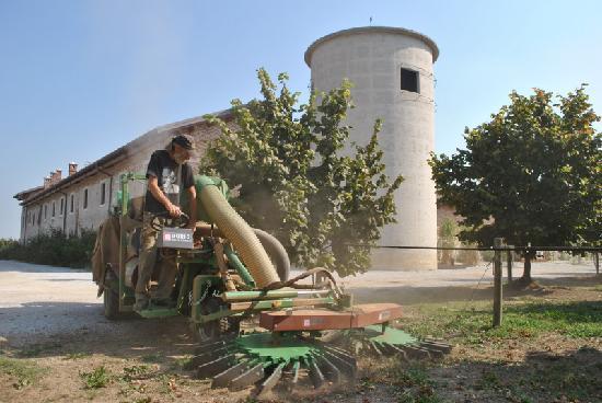 Agriturismo Tetto Garrone : Hazelnuts picking