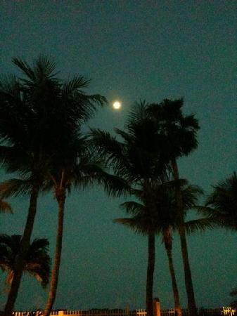 The New Casablanca on the Ocean Hotel: full moon over palm trees in pool area
