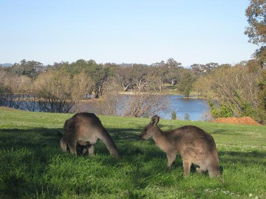 แคนเบอร์รา, ออสเตรเลีย: Weston Park - Canberra
