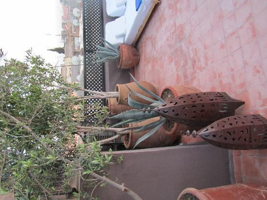 Riad Timila: The lovely trees on the roof