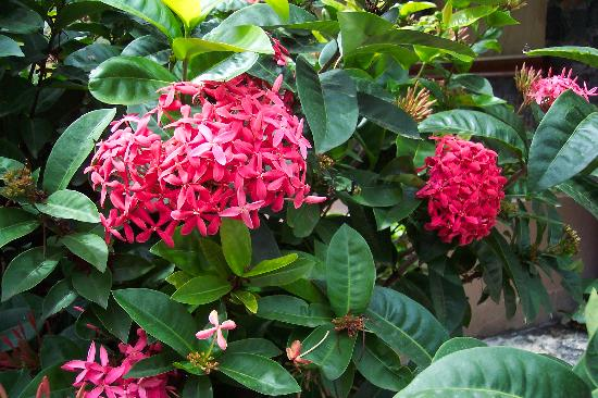 Antilles At Sapphire Beach Resort: Beautiful flowers on the grounds