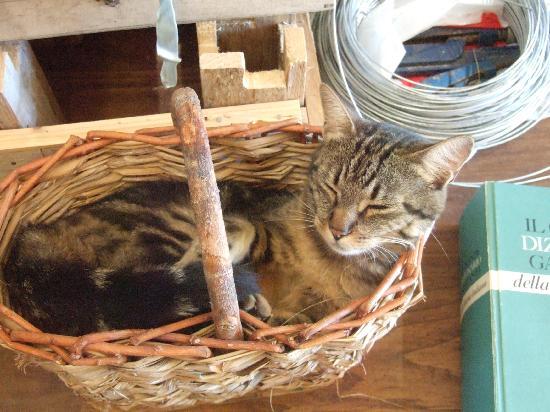 Agriturismo Il Molinello: Family cat