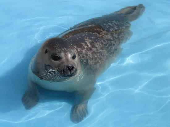 Natureland Seal Sanctuary: Check out that smile.
