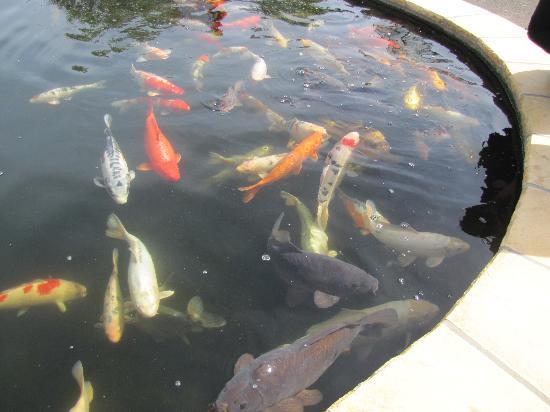 Natureland Seal Sanctuary: Koi Pond